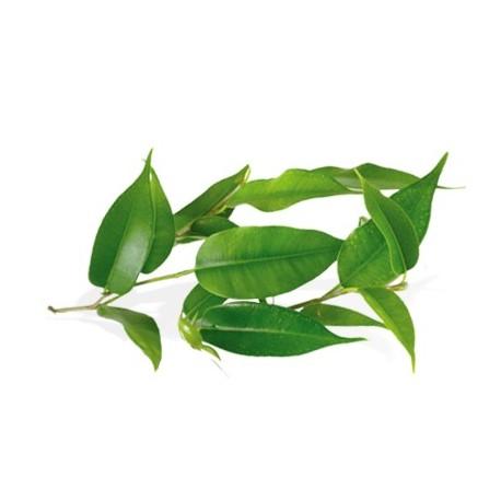 Huile Essentielle de TEA TREE BIO plantes sauvages 10 ml